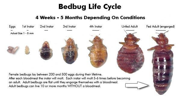 5 Best Methods to Stop Bed Bug Bites Immediately