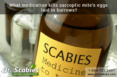 What Medication Kills Sarcoptic Mite's Eggs Laid in Burrows?