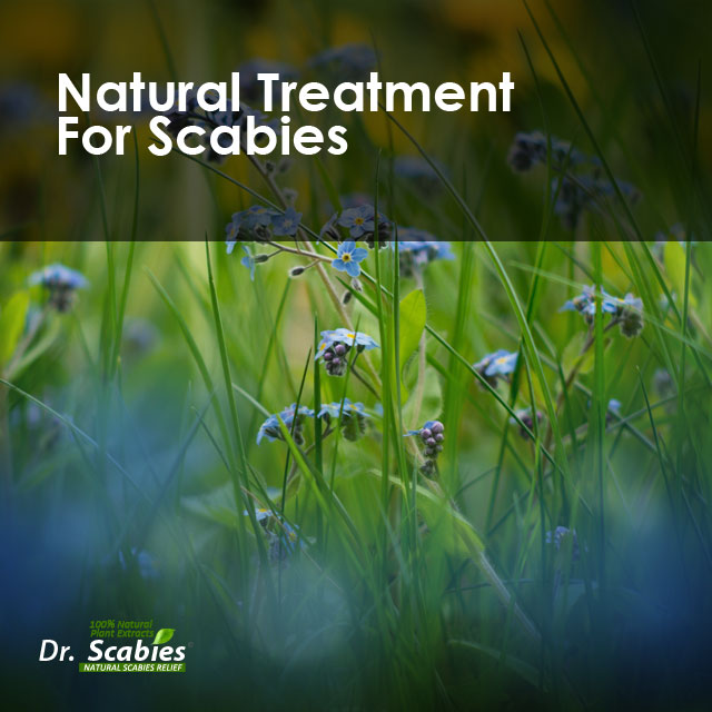 scabies home treatment, scabies home medication